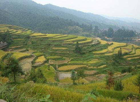 terrasses rizières