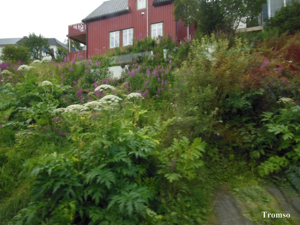 norvege-tromso2