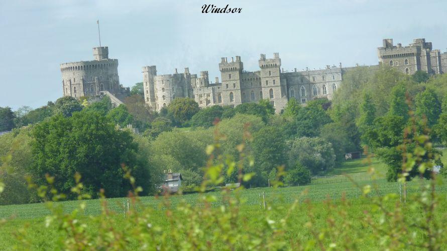 Windsor (83)