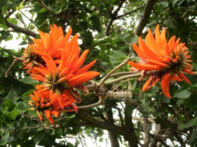 fleurs(16)