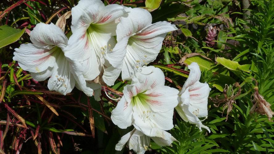 fleurs(23)