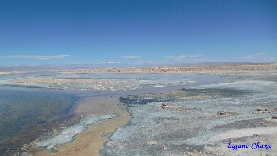 lagune Chaxa4