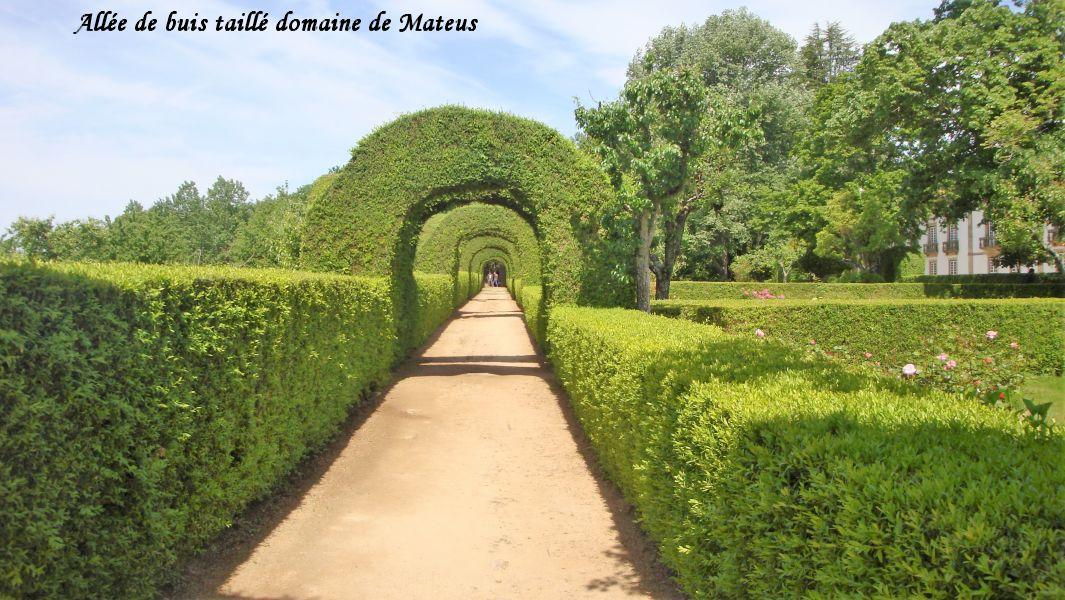 23 jardins Mateus