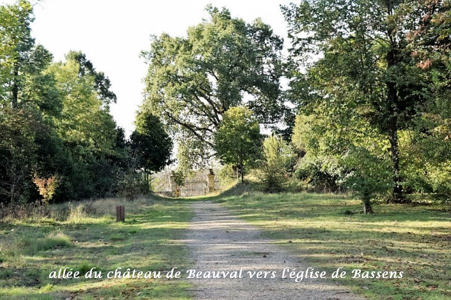 04-allee-parc-beauval