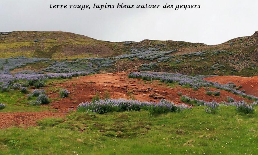 01 Geysir terre rouge lupins