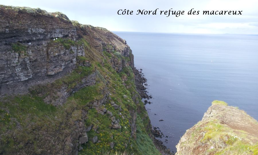 08 cote nord macareux