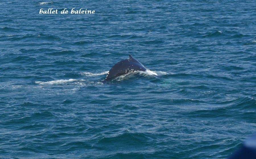 16 baleine
