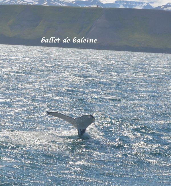 17 baleine