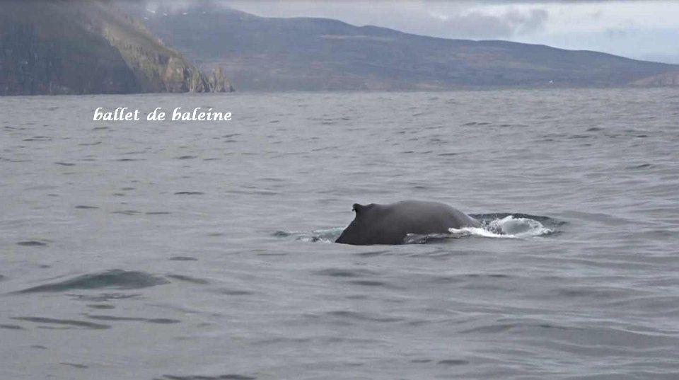 18 baleine