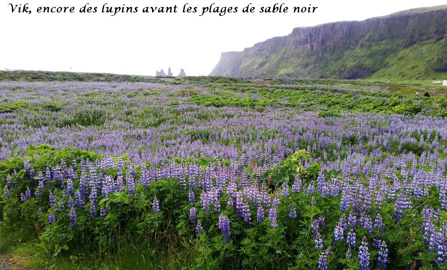 19 lupin plage sable noir