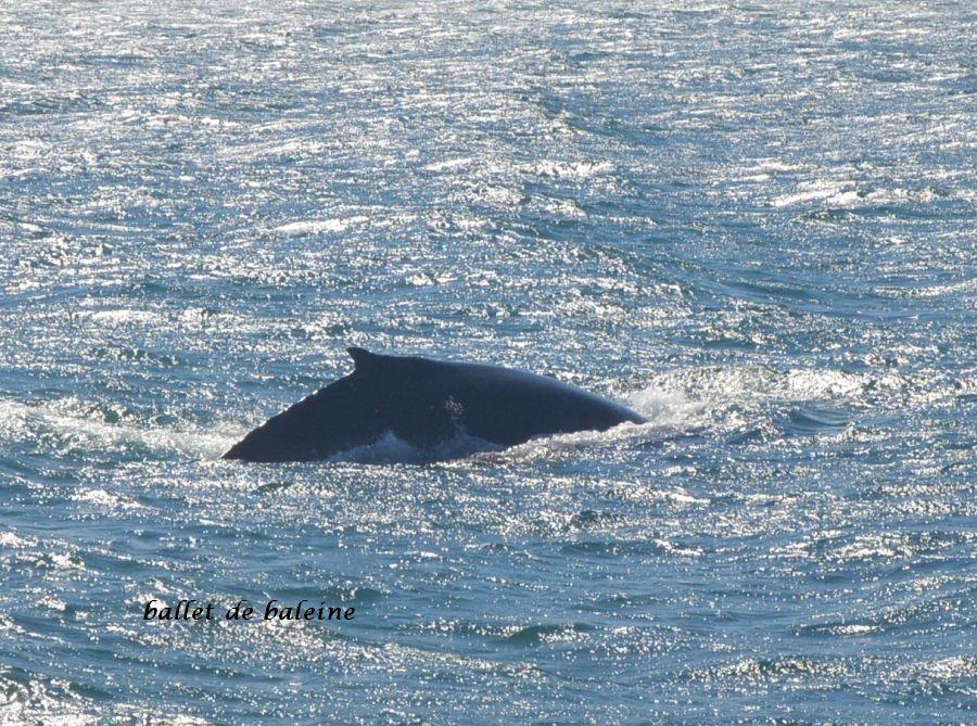 20 baleine