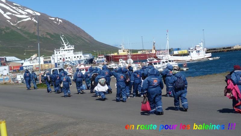 baleines2
