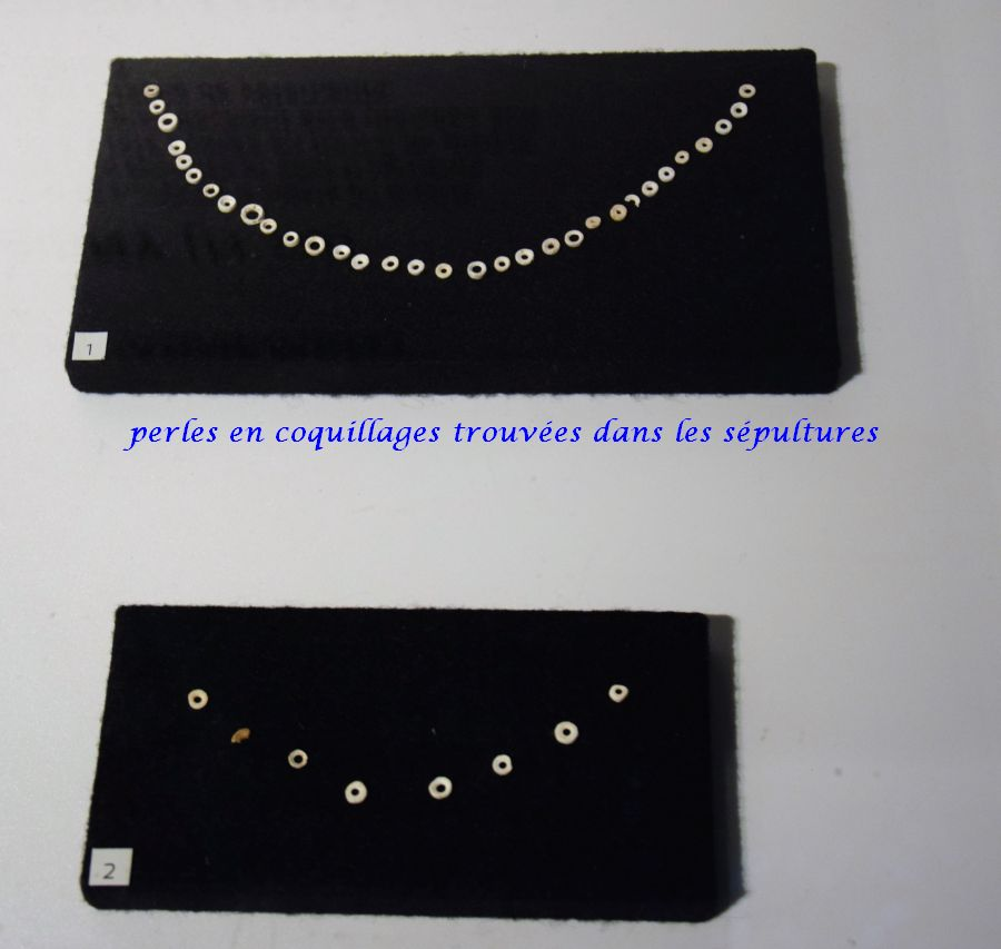 13 perles coquillages