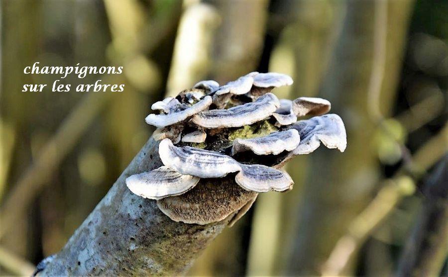 20 champignons sur les arbres