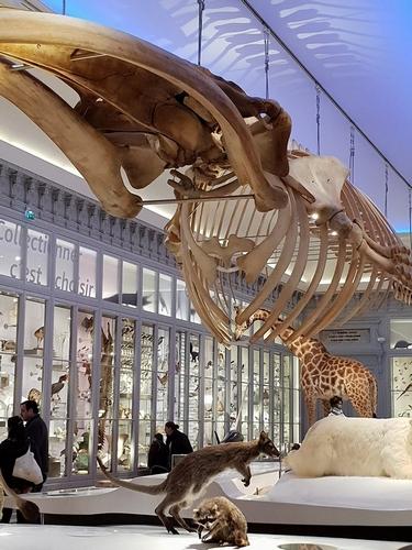 museum 3